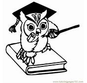 Owl Coloring Pages  Page 28 Free Printable