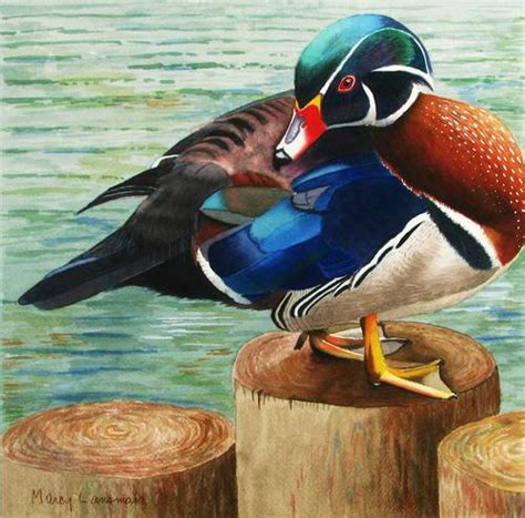 watercolor wood duck by manicmagician on deviantart painting quot wood duck quot original art by marcy lansman
