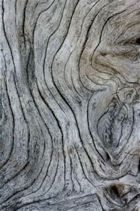 patterns in nature david pratt 1000 images about trunks bark branches texture and