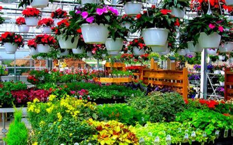 Jurus Sukses Bisnis Tanaman Hias bisnis tanaman hias dan peluangnya