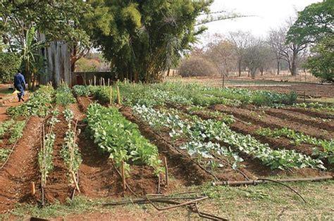 pipã a letto rimedi coltivare orto biologico orto orto biologico come