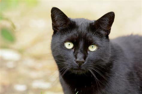 5 alimenti da evitare assolutamente per una corretta alimentazione cibo per gatti fatto in casa non sprecare