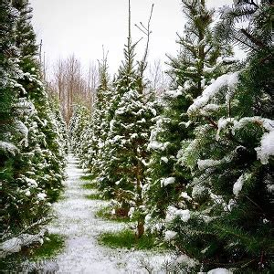 top tree farms in seattle area seattle and king to whatcom county areas of washington state tree farms choose and