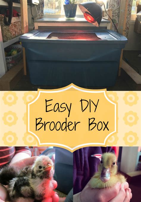 diy brooder box  cape coop