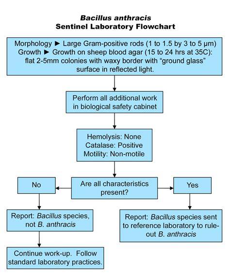 bacillus flowchart health environmental laboratories bacillus