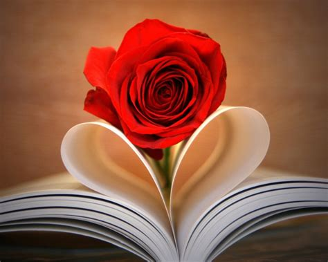 roses books book wallpaper 40898