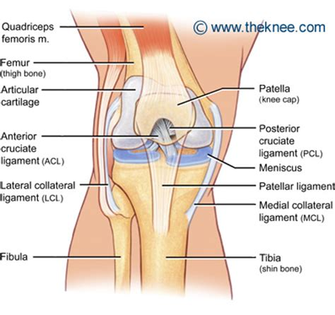 knee diagrams what is the meniscus the knee