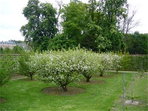 small backyard orchard 540 best garden grows images on plants