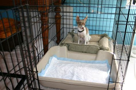 puppy using bathroom in crate dogmantics dog training blog making an escape proof x pen and toilet training ideas