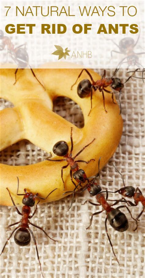 best way to get rid of ants in bathroom 7 natural ways to get rid of ants all natural home and