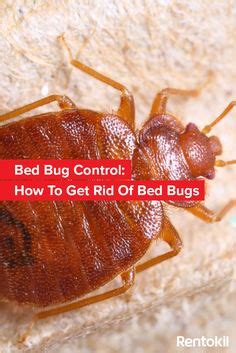 bed bug bite infographic bed bugs bed bugs