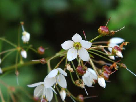 imagenes de flores silvestres chilenas 10 best flores silvestres sur de chile images on