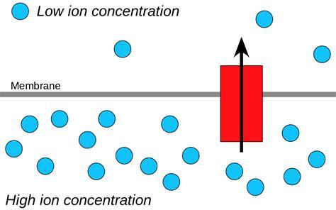 define protons chemiosmosis
