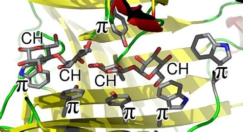 carbohydrates journal molecules special issue protein carbohydrate interactions