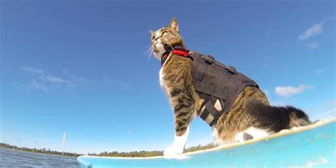 cat cat surfing skateboarding cat proves our feline friends make
