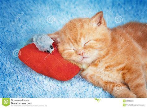 foto sul cuscino piccolo gattino che dorme sul cuscino con il topo