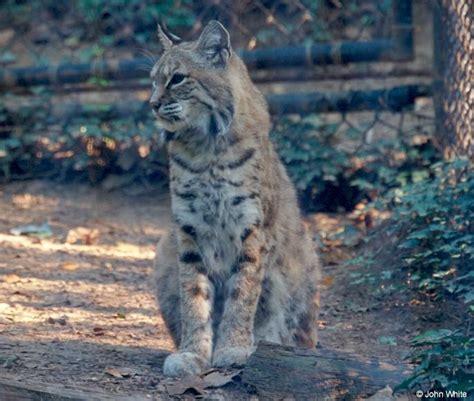 Common Mammals of Kentucky
