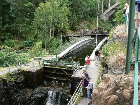 Wild Nature Sweepstakes - wild nature in 216 stfold picture of ostfold eastern norway tripadvisor