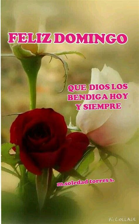 imagenes feliz domingo con rosas feliz domingo mensajes pinterest