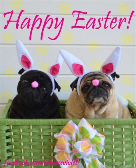 happy easter pug happy easter pugs for the of puppies