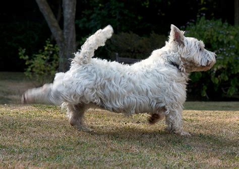 why do dogs kick their back legs 5 behaviors and what they