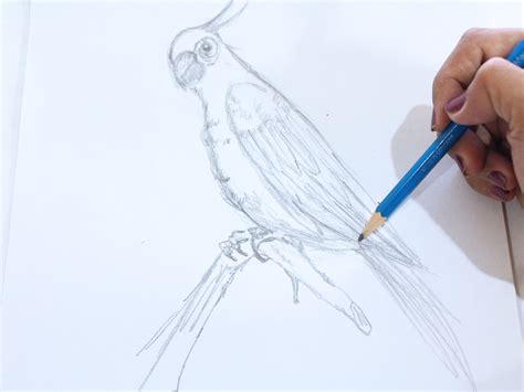 how to make doodle how to draw a parakeet 5 steps with pictures wikihow