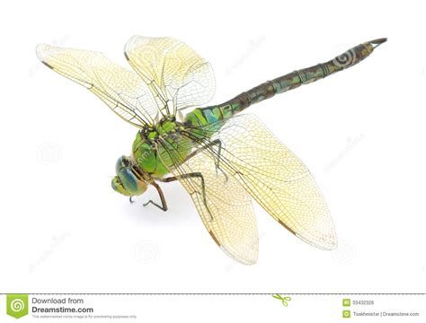 green dragonfly l dragonfly stock photo image of insects iridescent