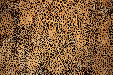 Animal Print by Great Animal Print Pictures 43 7661