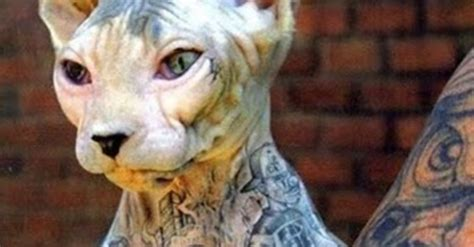 mr cartoon tattoo cat new york passes bill to ban piercing and tattooing pets