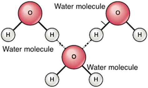 hydration shell definition image gallery molecules cohesion