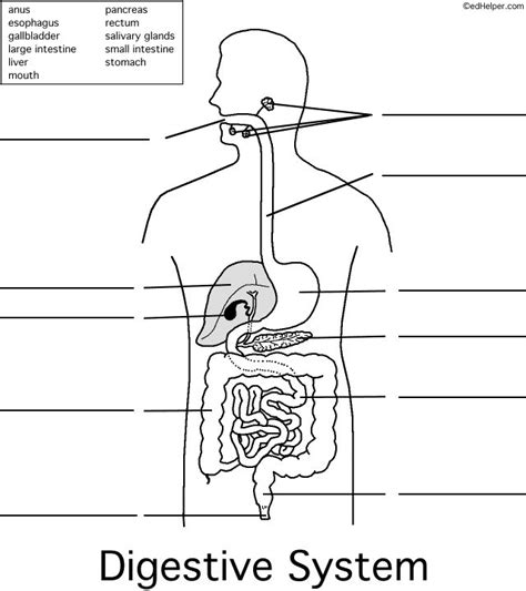 digestive system coloring page key 15 best digestive system images on pinterest teaching