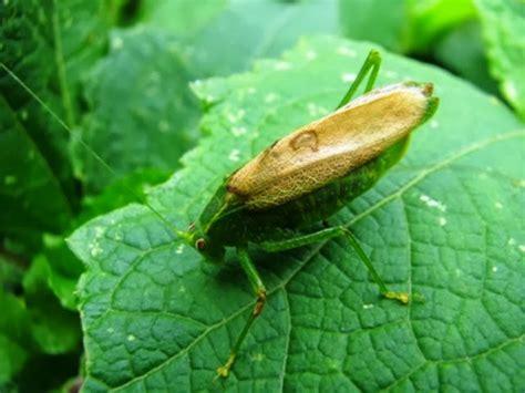 gua de insectos de insectos de los bosques del volc 225 n chicabal