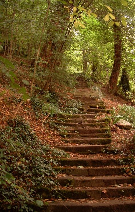 stairs in the woods by shotgun on deviantart