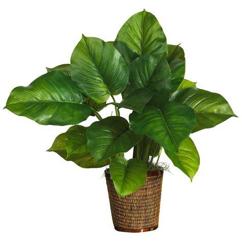 piante interno poca luce piante da appartamento poca luce piante da interno