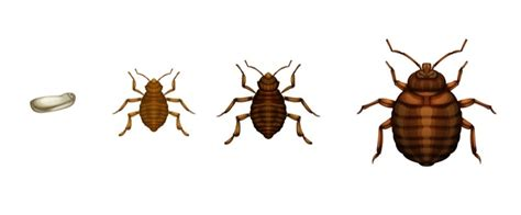 can you die from bed bugs discover the 5 bed bugs myths to avoid