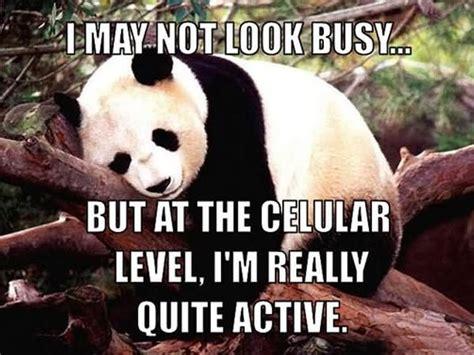 funniest lazy meme pictures     laugh