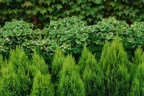 and green foliage plants green gardens dirt simple