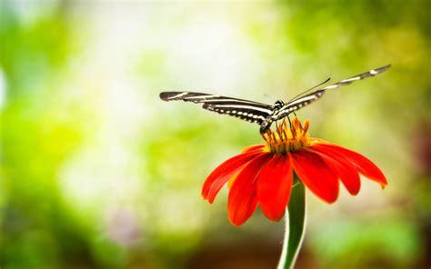 wallpaper flower with butterfly flowers with butterfly wallpaper hd hd desktop