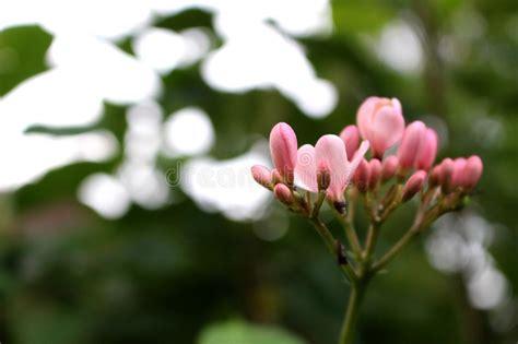 imagenes de flores asombrosas ci 233 rrese encima de las flores asombrosas hermosas en fondo