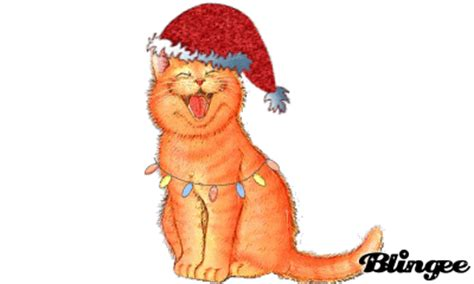 laughing christmas cat picture  blingeecom