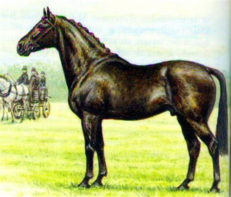versi di animali da cortile cavallo in vendita annunci cuccioli cavallo the