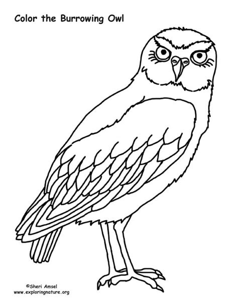 burrowing owl printable pictures burrowing owl coloring nature