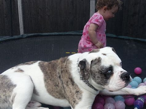 rare dog breeds puppies rare large dog breeds