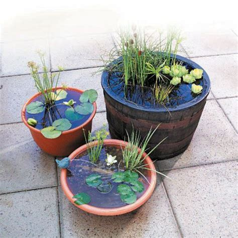 Diy Container Garden by How To Make A Container Water Garden Diy Boards