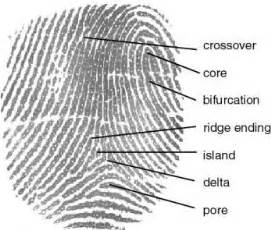 fingerprint template sle 6 types of minutiae