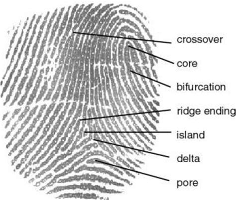 pattern rights definition rosistem barcode biometric education