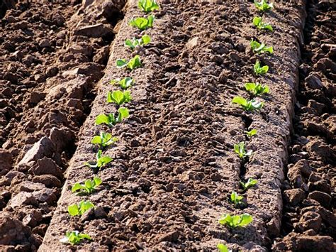 when to till soil for a vegetable garden arizona soil tilling cultivation arizona vegetable