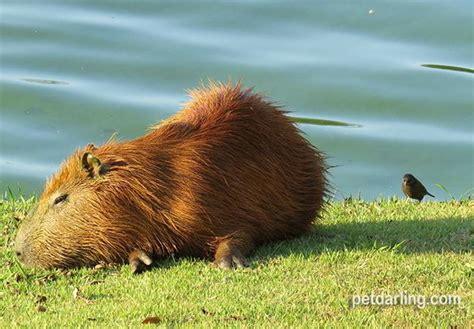 imagenes animales de la selva im 193 genes de animales de la selva