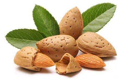 Kacang Almond Naraya 900gr 1 kenali 17 manfaat kacang almond untuk kesehatan tubuh