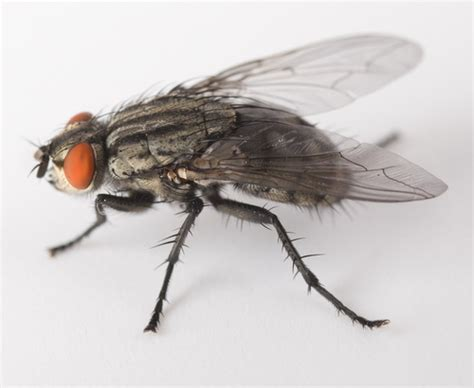 Flies In House by Flies Can Ruin Reputation Harm Health And Hit Business